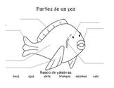 Partes de un pez/Parts of a fish