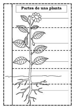 Partes de un planta