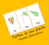 Partes de una planta | Flash Cards | Tarjetas Informativas