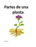 Partes de una planta/ Parts of a plant in Spanish