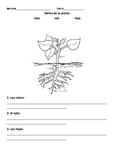 Partes de una planta- Spanish