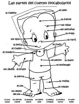 Body Parts-Vocabulary (Spanish)