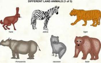 Partes del cuerpo animal