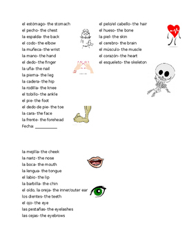 Partes del cuerpo parts of the body vocabulary list and key