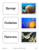 Partner Picking Cards ~ Science:  13 Phyla