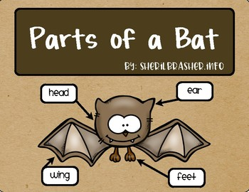 parts of a bat english Parts of a Rabbit Diagram
