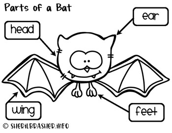 Parts Of A Bat | English