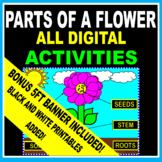 Parts Of A Flower Digital Activity - Distance Learning