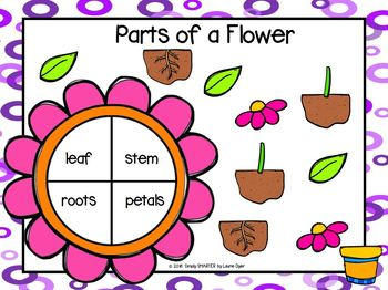 Parts Of A Flower Emergent Reader Book AND Interactive Activities