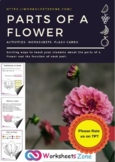 Parts Of A Flower worksheet Activity, Plants Interactive Notebook
