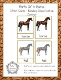 Parts Of A Horse - Montessori 3 Part Cards - Reading Classification