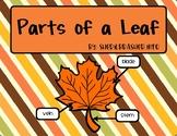 Parts Of A Leaf | English |