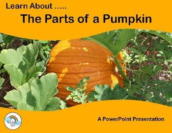 Parts Of A Pumpkin PowerPoint