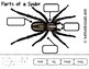 Parts Of A Spider | English |