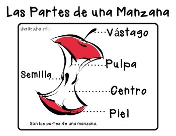 Parts Of An Apple - Bilingual Pack (Spanish & English)