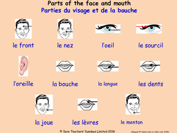 Parts Of The Body in French Posters / Slides