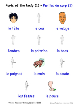 Parts Of The Body in French Word searches / Wordsearches