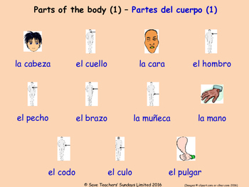 Parts Of The Body in Spanish Posters / Slides