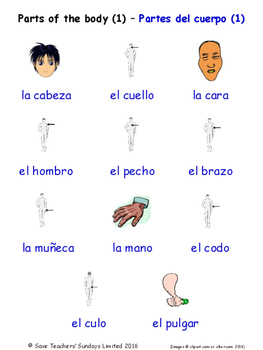 Parts Of The Body in Spanish Word searches / Wordsearches