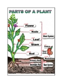 Parts Of a Plant Notes Handout Labeled