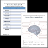 Parts and Functions of the Brain Labeling Worksheet - Science