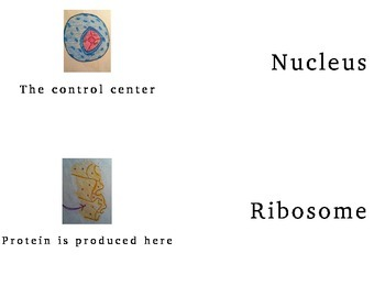 Parts of A Cell Flash Cards