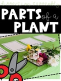 Parts of A Plant (Hands-On Dissection and Assembly)