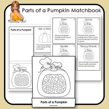 Parts of A Pumpkin