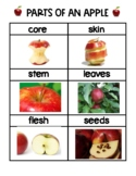 Parts of An Apple Picture Vocabulary Words