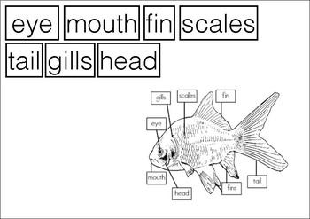 Parts of Animals