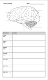 Parts of Brain Notes and Coloring