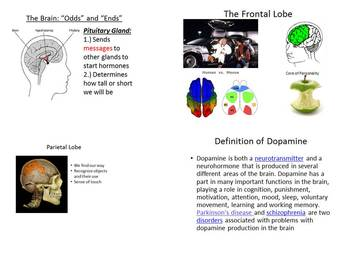 Parts of Brain Powerpoint Anatomy Psychology Dopamine Endo Lobes Note Activities