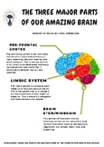 Parts of Our Brain Poster