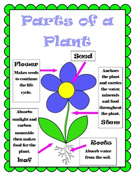 Parts of Plant Poster