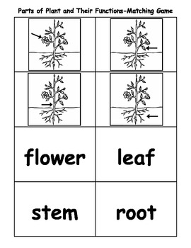 parts of plant and their functions matching game by kindergarten kreative. Black Bedroom Furniture Sets. Home Design Ideas
