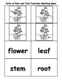Parts of Plant and Their Functions Matching Game