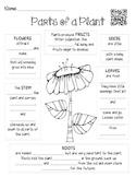 Parts of Plants & Facts About Plants