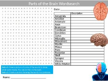 Parts of The Brain Wordsearch Sheet Starter Activity Mind Psychology