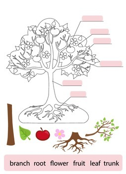 Parts of Tree.Clipart.Tree structure trunk, root, branch, fruit, leaf, root