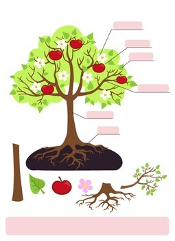 Parts Of Tree Clipart Tree Structure Trunk Root Branch Fruit Leaf Root