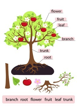 Parts of Tree.Clipart.Tree structure trunk, root, branch,