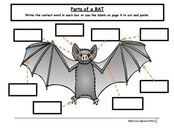 Parts of a Bat!