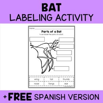 Parts of a Bat Activity