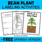 Vocabulary Activities - Parts of a Bean Plant