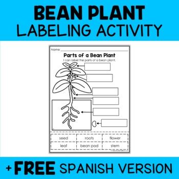 Parts of a Bean Plant Activity