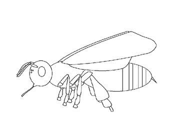Parts of a Bee 3-D Model