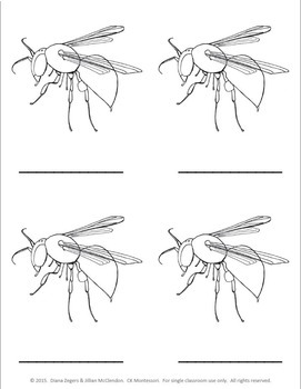 Parts of a Bee - Montessori 3 Part Cards