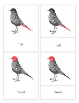 Parts of a Bird 3-Part Nomenclature Cards- Montessori