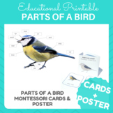 Birds! Parts of a Bird Cards & Poster - Montessori Inspired