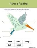 Parts of a Bird Freebie
